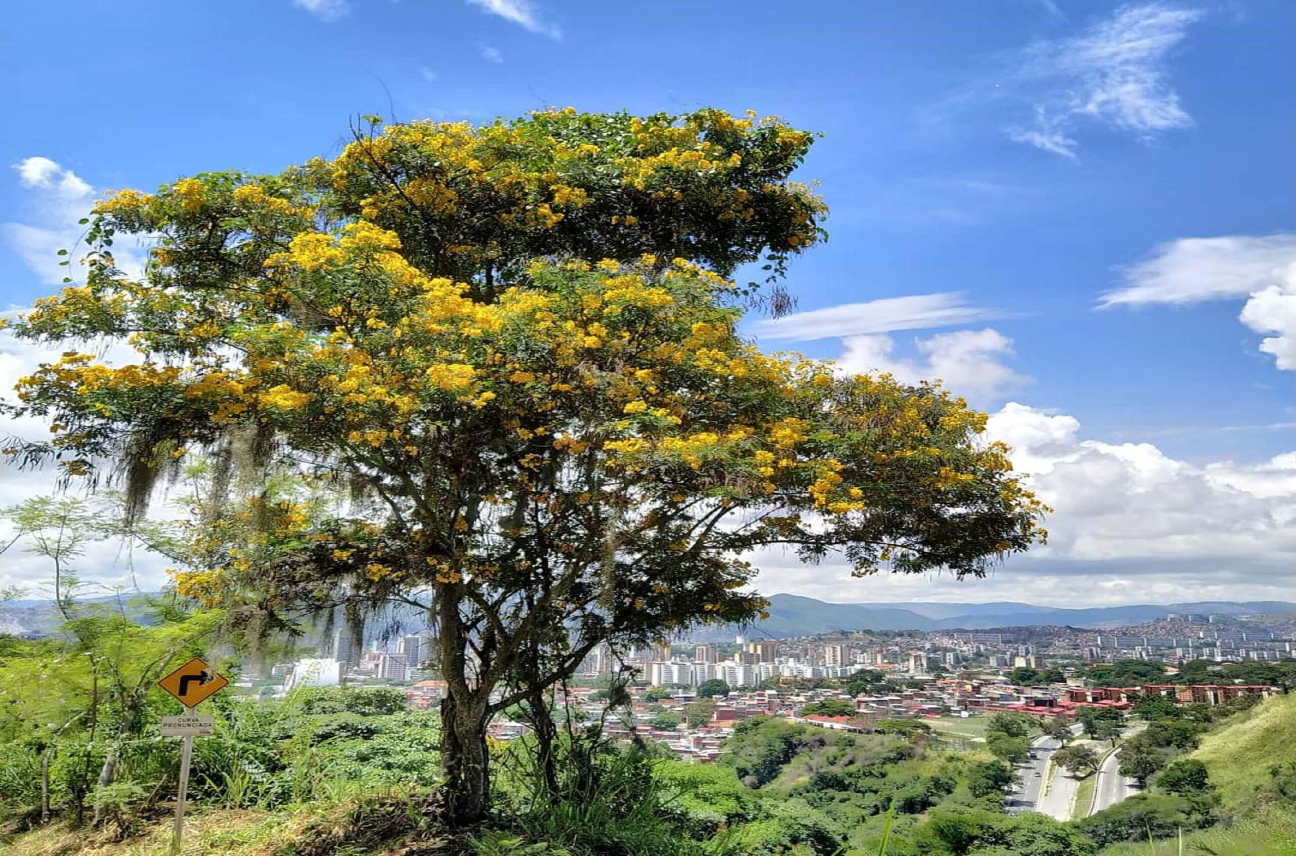 Amarillo para Caracas - Ser Caraqueño