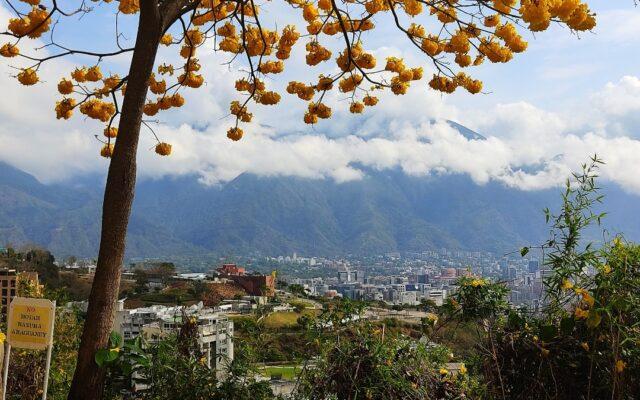 Caracas-en-Araguaney-Antonio-Urdaneta.jpg ser caraqueño