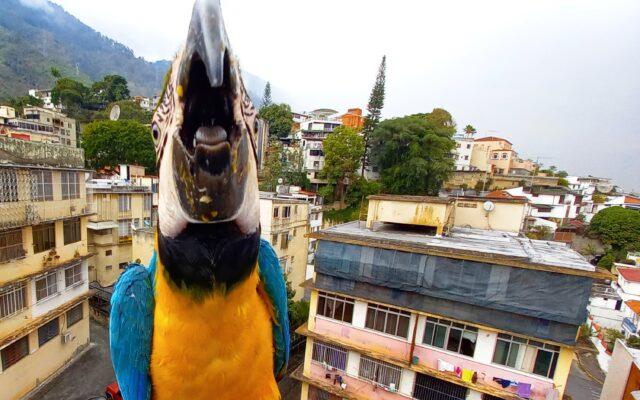 Caracas Pica Duro - Ser Caraqueño
