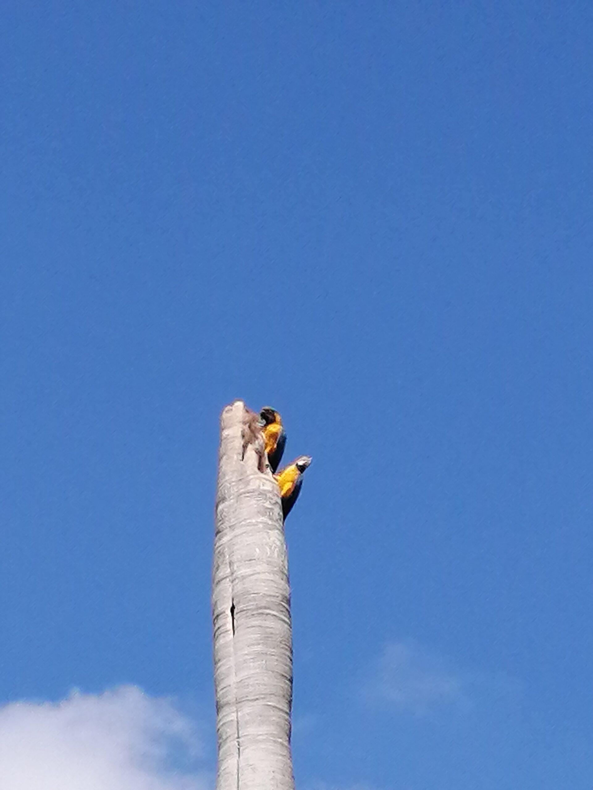 Guacamayas en el cielo de caracas - ser caraqueño