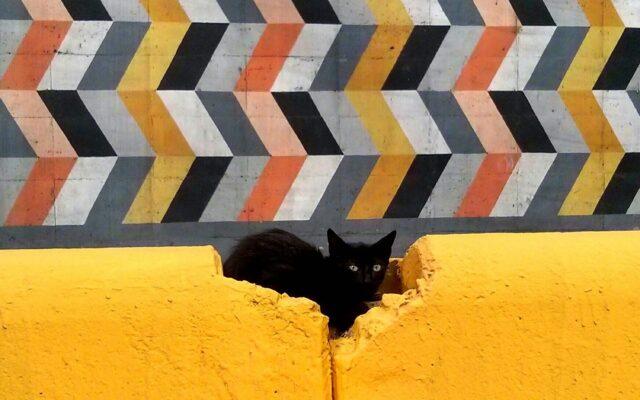 Gato cinético - Ser Caraqueño